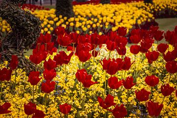 Tulpen von Frans Janssen