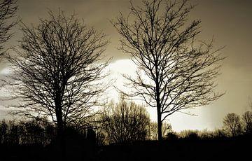 Bäume von Annemarie Kroon