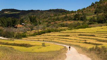 Wandelen door de rijstvelden sur Cindy Nijssen