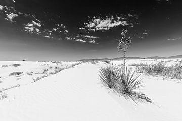 White Sands Impression | Monochroom van Melanie Viola