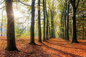 Zonsopkomst in de herfst in het bos von Dennis van de Water