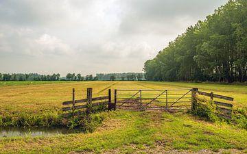 Geschlossener Zaun am Rande von ausgetrocknetem Grünland von Ruud Morijn