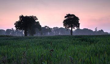 Frankrijk Cerisy -la -Forêt bomen von Rob van der Teen