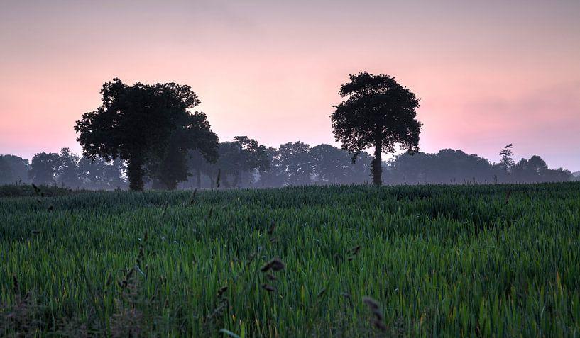 Frankrijk Cerisy -la -Forêt bomen van Rob van der Teen