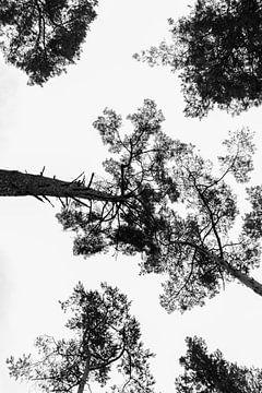 Bäume - Schwarz-Weiß-Druck von MDRN HOME