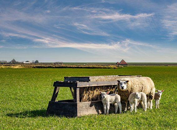 moeder schaap met lammetjes texel  van Texel360Fotografie Richard Heerschap