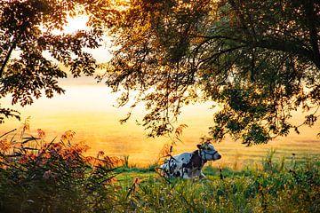 Koe in hollands landschap weiland in de herfstmist van Jacoline van Dijk