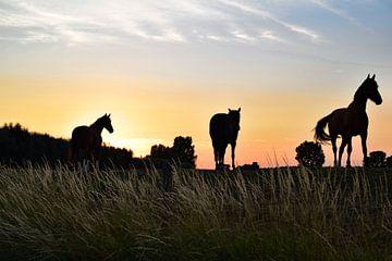 Paarden op de dijk tijdens zonsondergang van