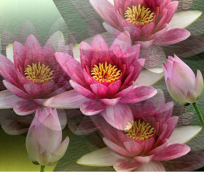 Impressionen einer Lotusblüte van Gertrud Scheffler