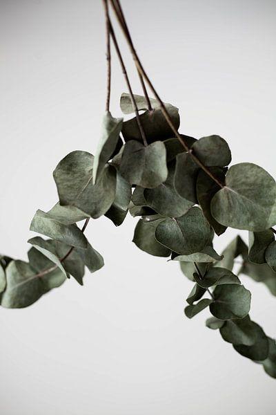 eucalyptus van Melanie Schat