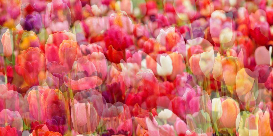 Tulips van Claudia Moeckel