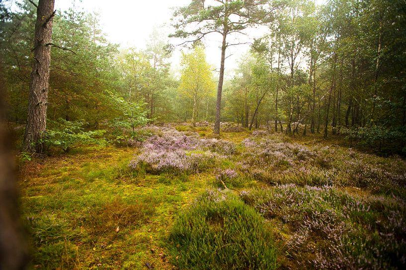 Dutch Landscapes van Oscar Limahelu