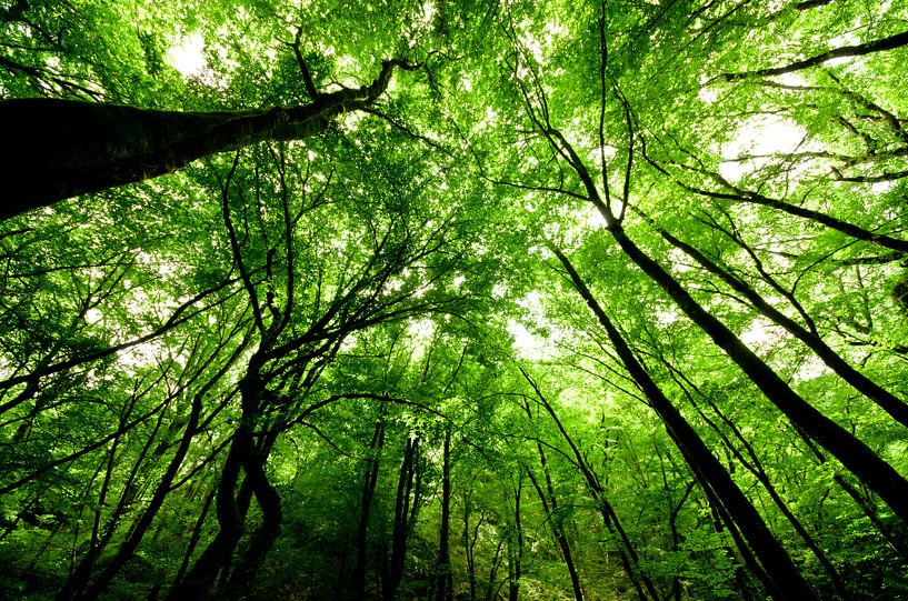 In het bos van Ricardo Bouman | Fotografie