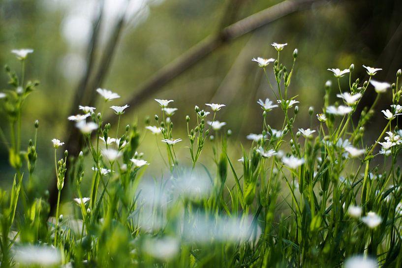 Witte bloem van David Muntinga