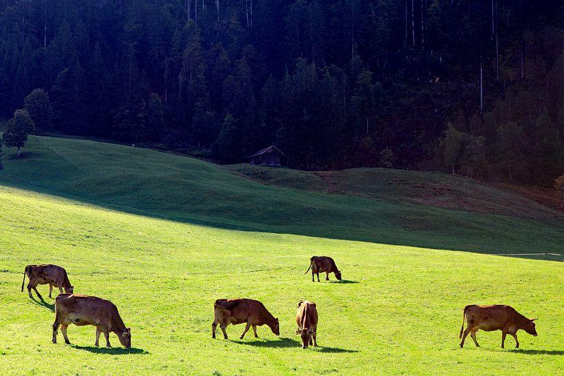 Grazende koeien in het Kleinwalsertal (A) van Ludo Verhoeven