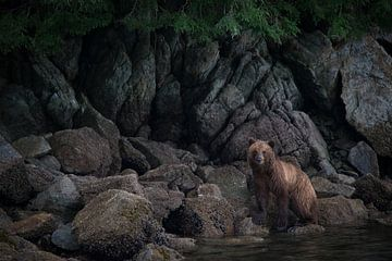 Ours brun en Alaska sur Heleen Middel