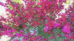 Landscape colors red van Jenny Heß
