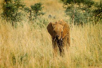 Éléphant II sur Geke Woudstra