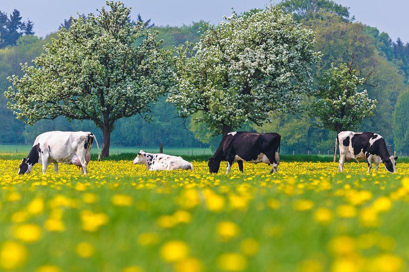 Hollandse koeien tussen de paardenbloemen van Martin Bergsma