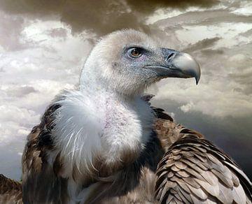 Roofvogel Vale Gier von Gonnie van Hove