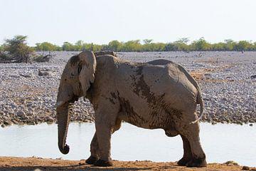 Grote oude olifant van GoWildGoNaturepictures