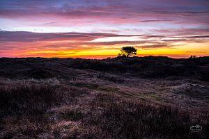Gouden uur in de duinen van Ameland van Martien Hoogebeen Fotografie