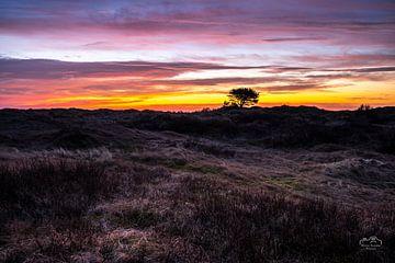 Goldene Stunde in den Dünen von Ameland von Martien Hoogebeen Fotografie