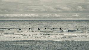 Surfers paradise van