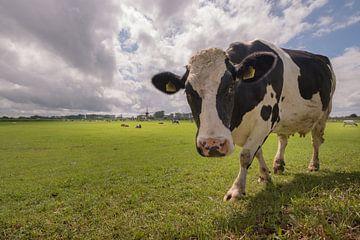 Neugierige Kuh von Moetwil en van Dijk - Fotografie