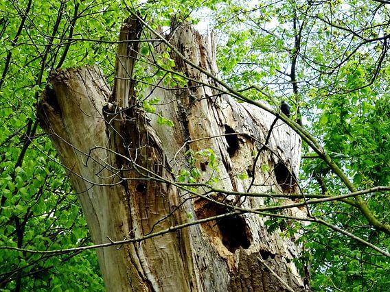 Tree Magic 167 van MoArt (Maurice Heuts)
