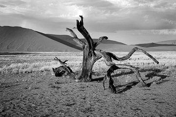 dood hout in de Namib woestijn (Sosusvlei) Namibië van