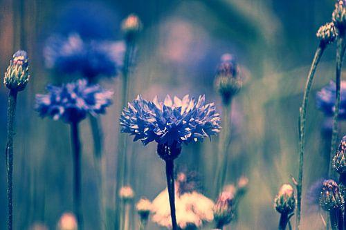 HAZY BLUE