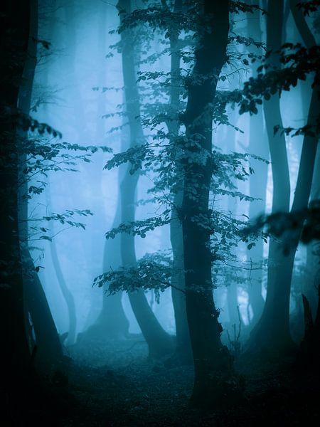 Herfts in het bos (blauwtinten) van Mark Scheper