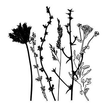 Botanische illustratie met planten, wilde bloemen en grassen 4.  Zwart wit.