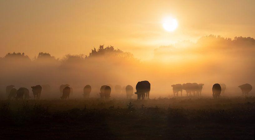 Koeien in de ochtendmist van Bart Ceuppens