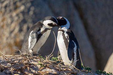 pinguïns van Dennis Eckert