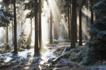 Winterbos van Oliver Henze