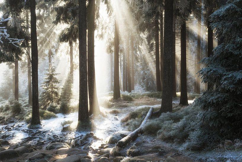 Winterwald von Oliver Henze