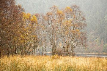 Birken im Herbst von Irma Meijerman