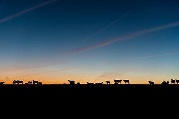 Schafe auf dem Deich von E Jansen