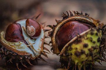 Herfst -kastanjes- 3 van Marianne Twijnstra-Gerrits