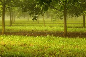 De Franse walnotengaard van