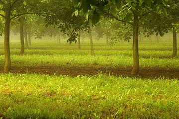 De Franse walnotengaard