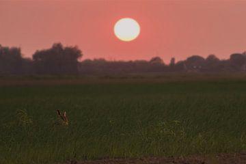 een haas onder de zonsondergang von Rubin Versigny