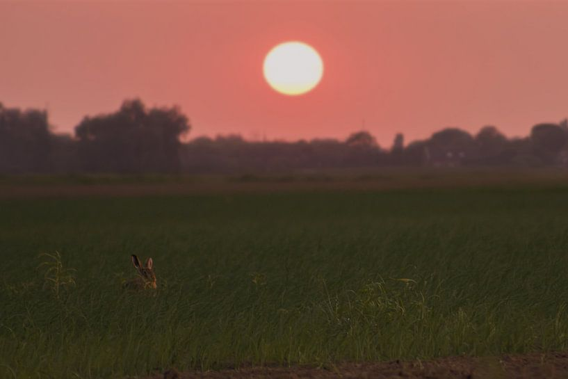 een haas onder de zonsondergang van Rubin Versigny