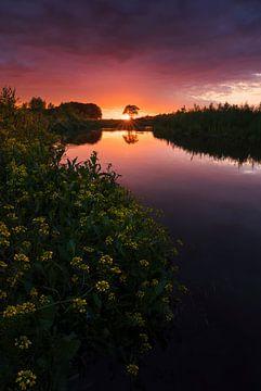 Combat de branches latérales au coucher du soleil sur Rick Kloekke