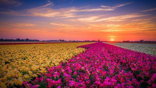 kleurrijk bloemenveld bij een zonsondergang van