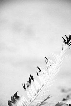 loneley feather van Nienke Stegeman