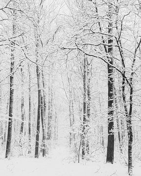 Witte bomen door sneeuw van Menno Bausch