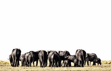 Olifanten in Etosha-park Namibië, Afrika van Tjeerd Kruse